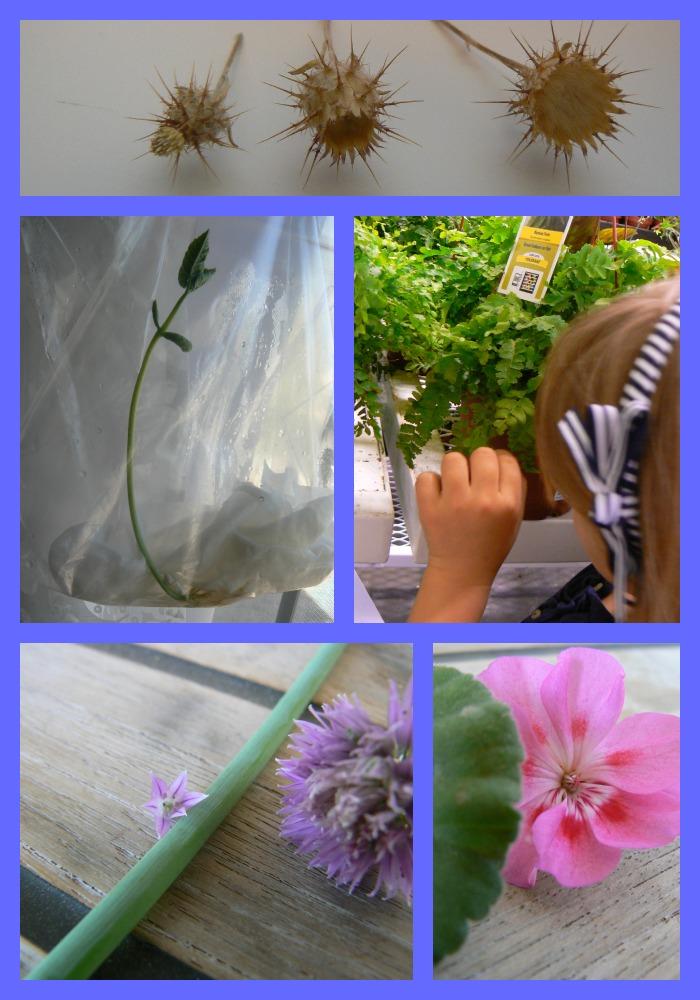 Grade 1 botany